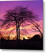 Bare Trees In Gorgeous Sunset Metal Print