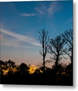Bare Trees Metal Print