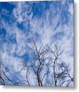 Bare Winter Branches In California Metal Print