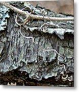 Bark - Lichen - Cat Brier Tendrils Metal Print