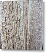 Bark, Moringa Tree Metal Print