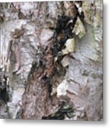 Bark Of The Birch Metal Print