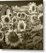 Barn And Sunflowers In Sepia Tone Metal Print