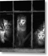 Barn Cats Metal Print