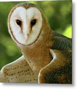 Barn Owl-6553 Metal Print
