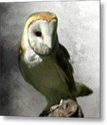 Barn Owl Metal Print by Crispin  Delgado