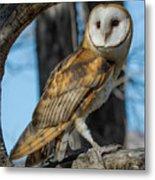 Barn Owl Framed In Cottonwood Metal Print