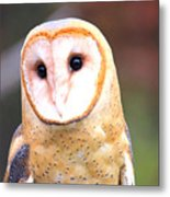 Barn Owl II Metal Print