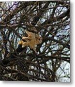 Barn Owl In A Tree Metal Print