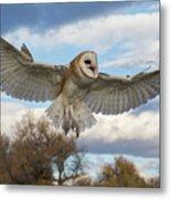 Barn Owl Makes A Happy Landing Metal Print