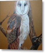 Barn Owl On Tree Metal Print