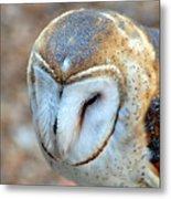 Barn Owle 1 Metal Print