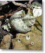Barnacles And Crabs Metal Print