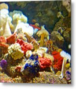 Barnacles And Sea Urchin Among Invertebrates In Monterey Aquarium-california  Metal Print