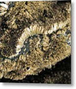 Barnacles At Low Tide Metal Print