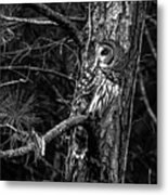 Barred In Black And White Metal Print