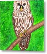 Barred Owl 08-18-2015 Metal Print