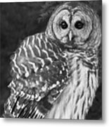 Barred Owl Beauty Metal Print