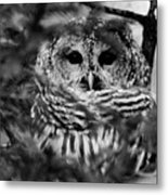 Barred Owl In Black And White Metal Print