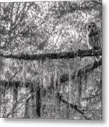 Barred Owl In Monochrome Metal Print