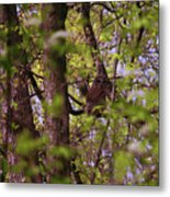 Barred Owl In The Forest Metal Print