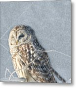 Barred Owl In The Snowstorm Metal Print