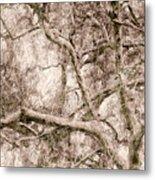 Barren Tree Metal Print