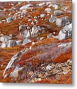 Barrens Metal Print