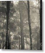Barrington Mist Metal Print