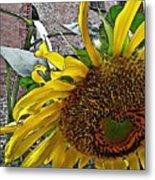 Barrio Sunflower 3 Metal Print
