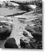 Basin Creek Metal Print