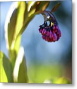 Basking Beauty Metal Print
