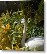Basking By The Pond Metal Print