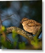Basking In The Morning Light Metal Print