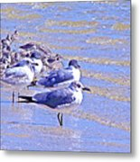 Basking On The Seashore Metal Print