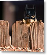 Bat Squirrel  The Cape Crusader Known For Putting Away Nuts.  Metal Print
