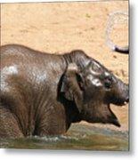 Bath Time At Dublin Zoo Metal Print