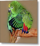 Bathing Beauty Amazon Metal Print