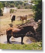 Bathing Horse Metal Print