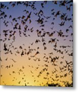 Bats At Bracken Cave Metal Print