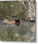 Bats Inside The Pyramid At Grupo Nohoch Mul At The Coba Ruins  Metal Print