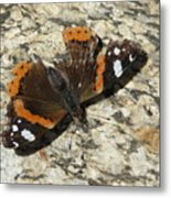 Battered Butterfly Metal Print