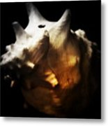 Battered Conch  Metal Print