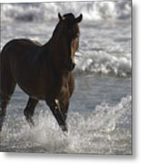 Bay Andalusian Stallion In The Surf Metal Print