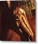 Bay Horse Art Horse Portrait Circe At Sunset Metal Print