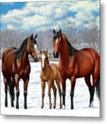 Bay Horses In Winter Pasture Metal Print