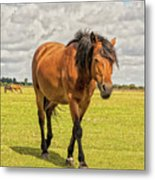 Bay Pony Metal Print