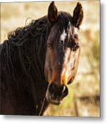 Bay Stallion Of Piceance Basin Metal Print
