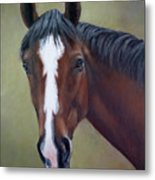 Bay Thoroughbred Horse Portrait Ottb Metal Print