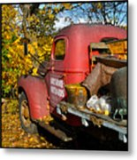 Bayshore Orchards Metal Print